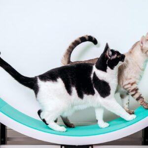 Kuva: Kaksi kissaa Ferris-juoksupyoralla
